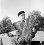 Man selling dill at vegetable market in Stockholm 1951